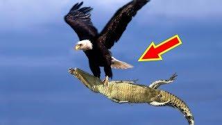 9 Lần Thất Bại Thảm Hại Của Cá Sấu
