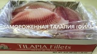 Фитнес рецепты: готовим рыбу