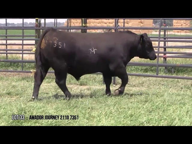 Mid Valley Bull Sale Lot 33