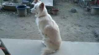 【関連動画】 ·犬はちょうどお風呂にしたくない - おかしい犬の入浴のコ...