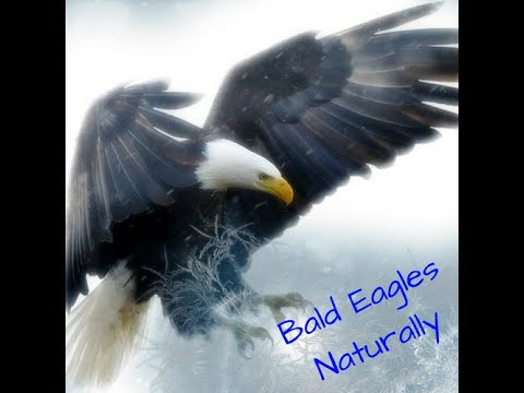 NADC-AEF EAGLE NEST 4.19.20 PART 2: WHAT'S GOING ON?