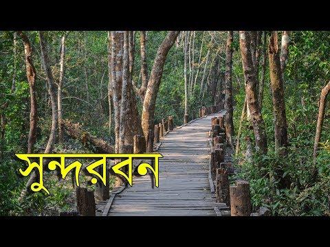Travel to Sundarbans | World's Largest Mangrove Forest