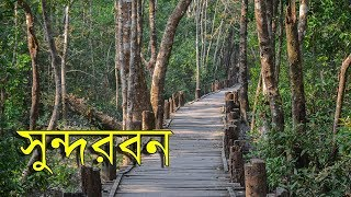 Travel Sundarban | World's Largest Mangrove Forest!