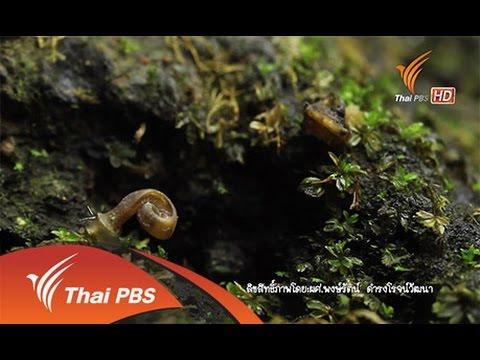 Nature Spy สายลับธรรมชาติ  : โลกหลงสำรวจ (24 ส.ค. 58)