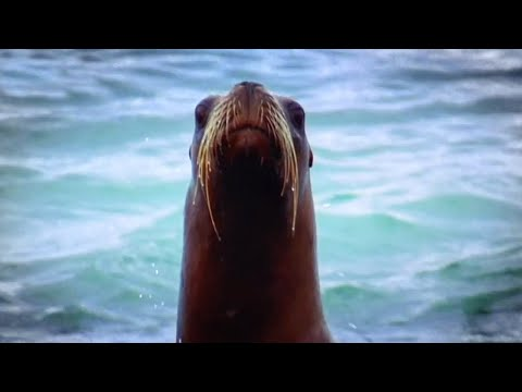 Killer Whale vs Sea Lion | Deadliest Showdowns | Earth Unplugged