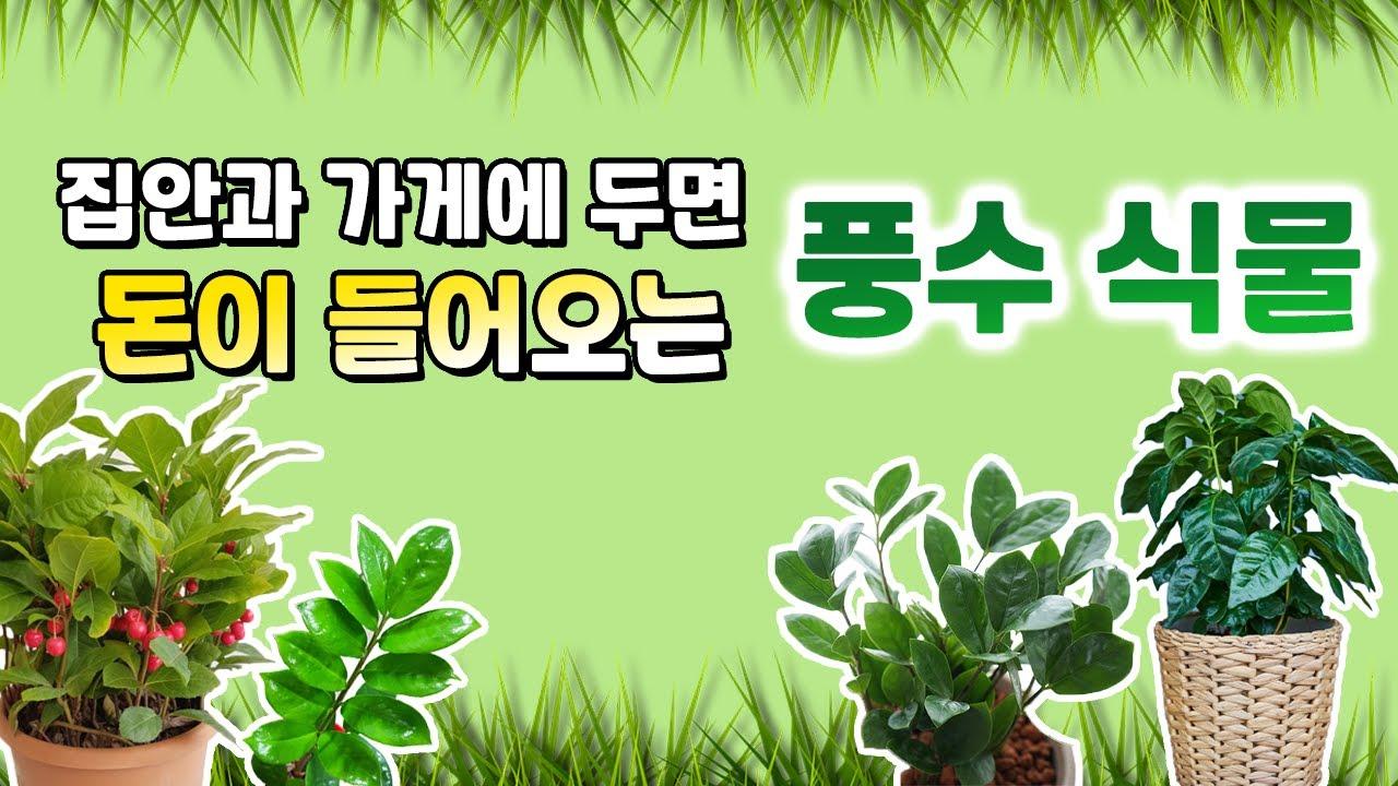 [풍수인테리어] 집안에 두면 돈이 들어오는 식물 5가지