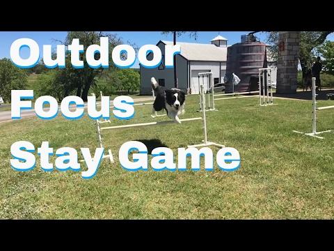 Canine Wine and Dine - Dog Training Life - VLOG 28