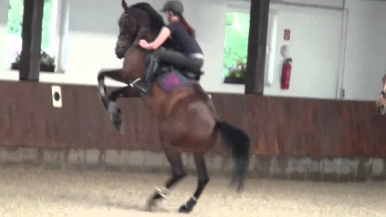Horse Bloopers and Fails