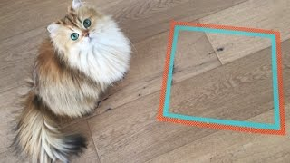Smoothie The Cat - Will She Sit Inside The Taped Square?