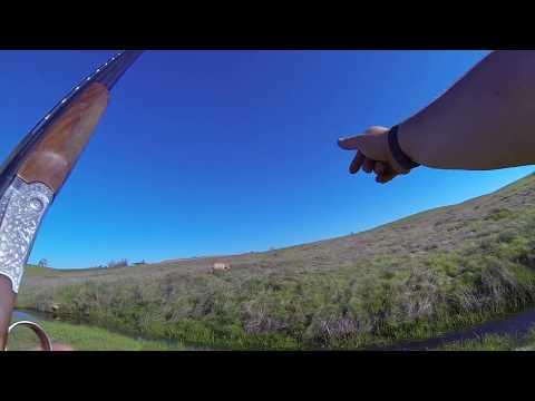 Pheasant Hunting|Camanche Hills