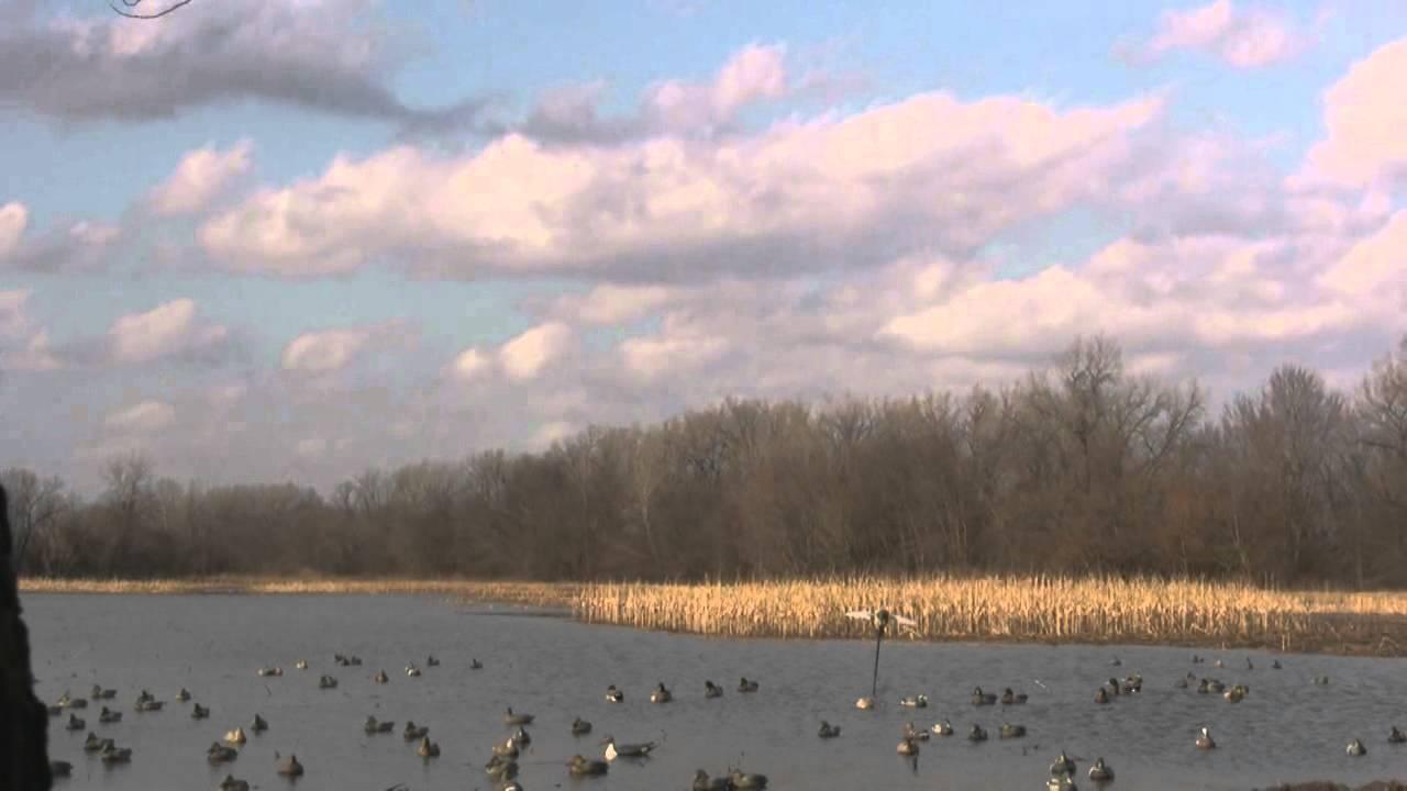 Mallard Farms Flooded Corn Duck Hunting Youtube