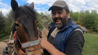 Konji nisu krave niti vanzemaljci