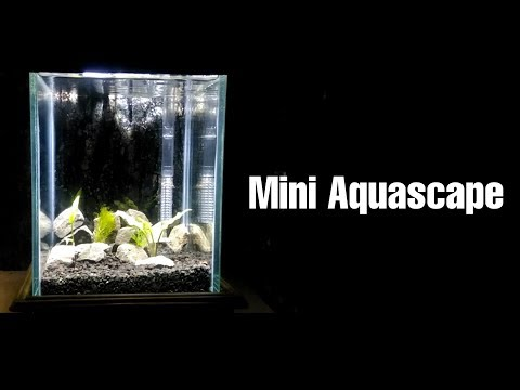 cara-membuat-aquascape-mini