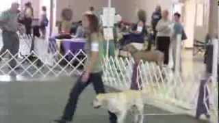 2013 08 24 Mensona Dog Show Cd Title