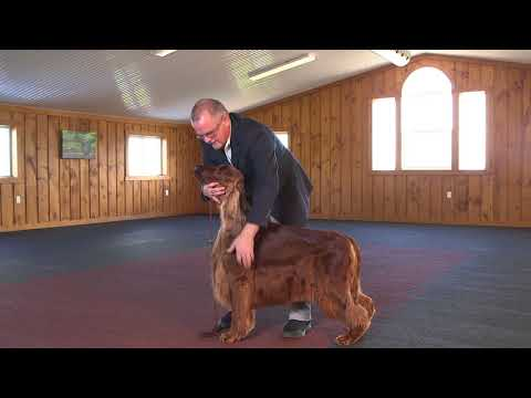 Dog Show Tips - The No Fuss Stack (Large Dog)
