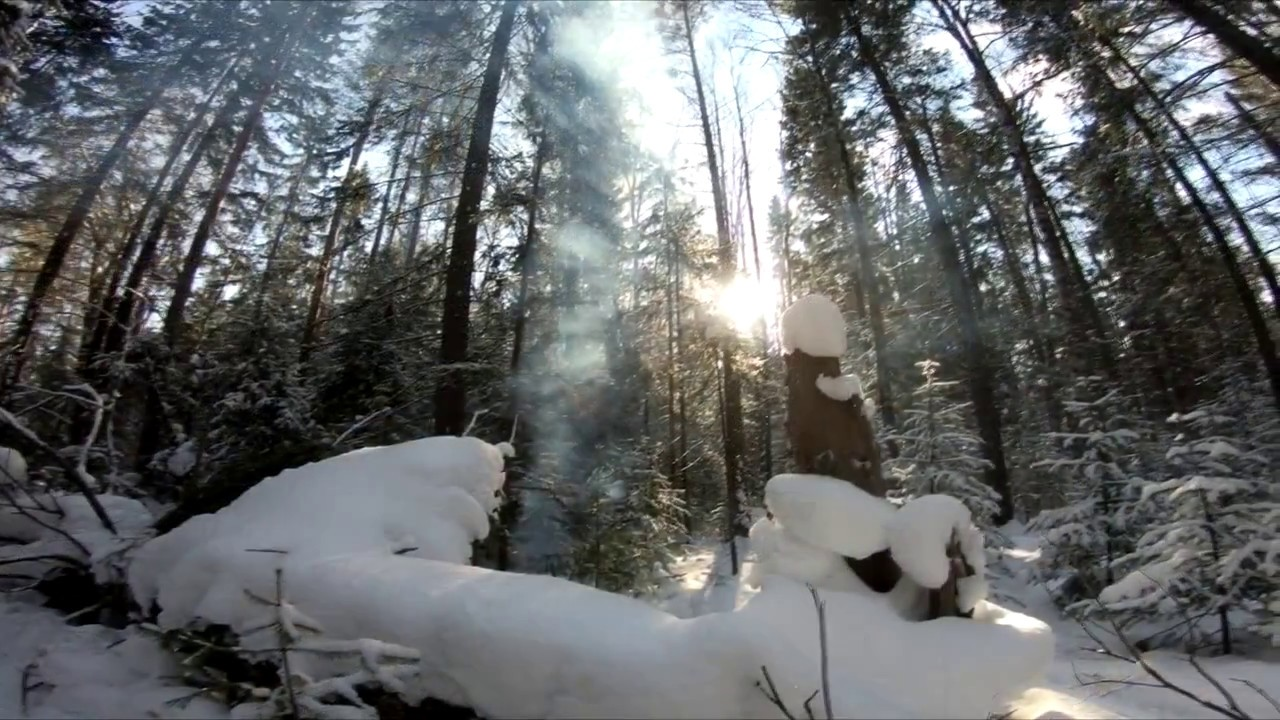 энергия фото конкурс жизнь леса и судьбы людей анкеты