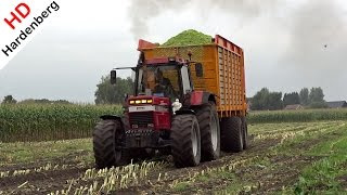 case international 1455 xl case ih puma 230 cvx   harvesting mais   nap   nl