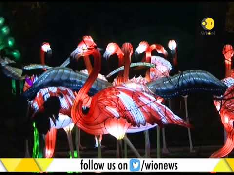 Giant Chinese lanterns light up Edinburgh Zoo