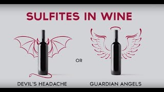 Wine & More: The Truth About Sulfites in Wine