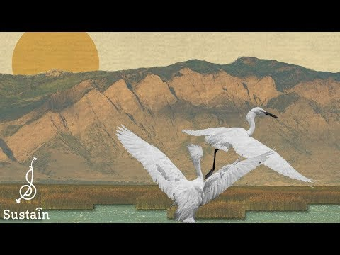 Songscape: Bear River Migratory Bird Refuge with Conner Youngblood