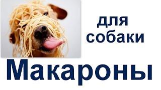 можно ли макароны собаке. Можно ли кормить макаронами собаку