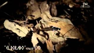 Video [MV] EXO - Let Out The Beast (Korean Ver.) (짐승을 보자) download MP3, 3GP, MP4, WEBM, AVI, FLV Januari 2018