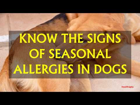KNOW THE SIGNS OF SEASONAL ALLERGIES IN DOGS