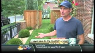 Keep your lawn green in summer heat