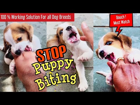 Stop Puppy Biting Gurranteed   Huge problem with Simple 100% Working Solutions