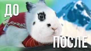 [До & После] Кролик: Нежданное Путешествие
