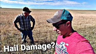 Hail Damage? The White Combine Strikes!