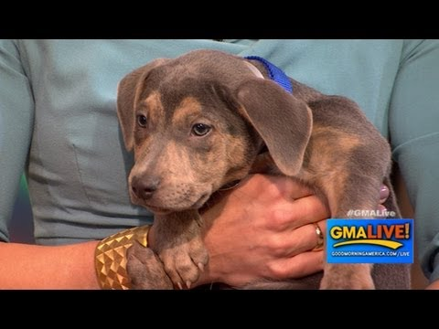 National Puppy Day: Cute Puppies Up for Adoption