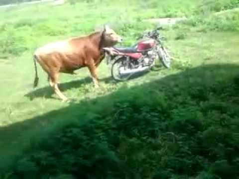 Effects of mad cow disease