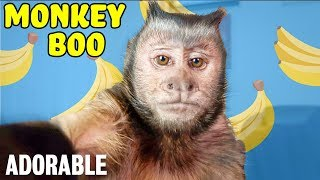 MONKEY BOO: THE MONKEY WITH MILLIONS OF FOLLOWERS