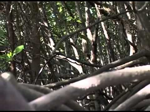 """""""Stoddart's Story- on Aldabra and Diego Garcia"""" May 2005 Seychelles Broadcasting Corporation"""