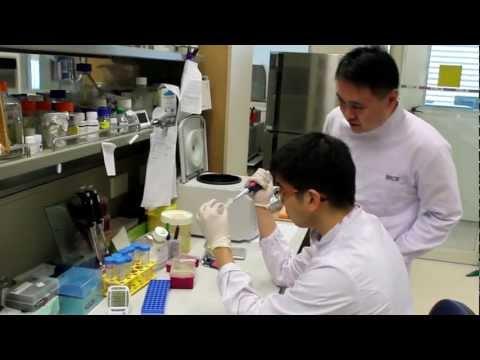 SP Biotechnology