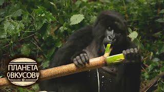 Руанда  Обед с гориллами
