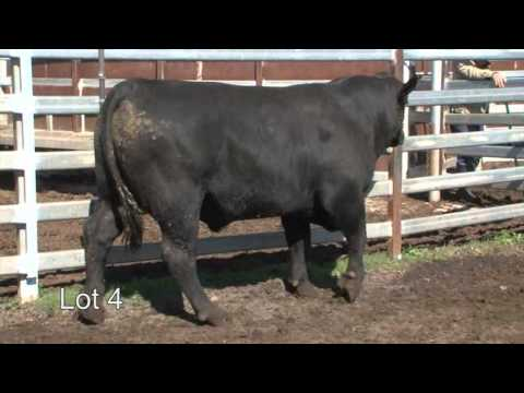 Burenda Angus 2013 Roma Sale Lot 4