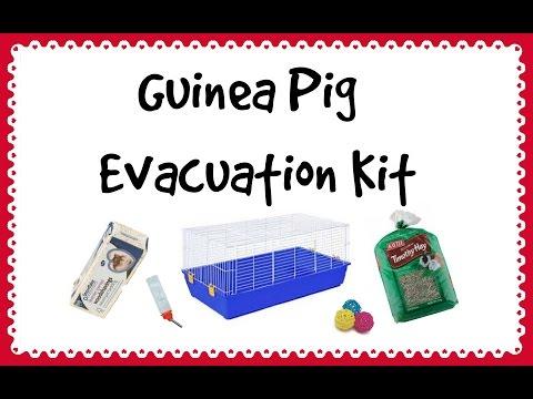 Guinea Pig Evacuation Kit