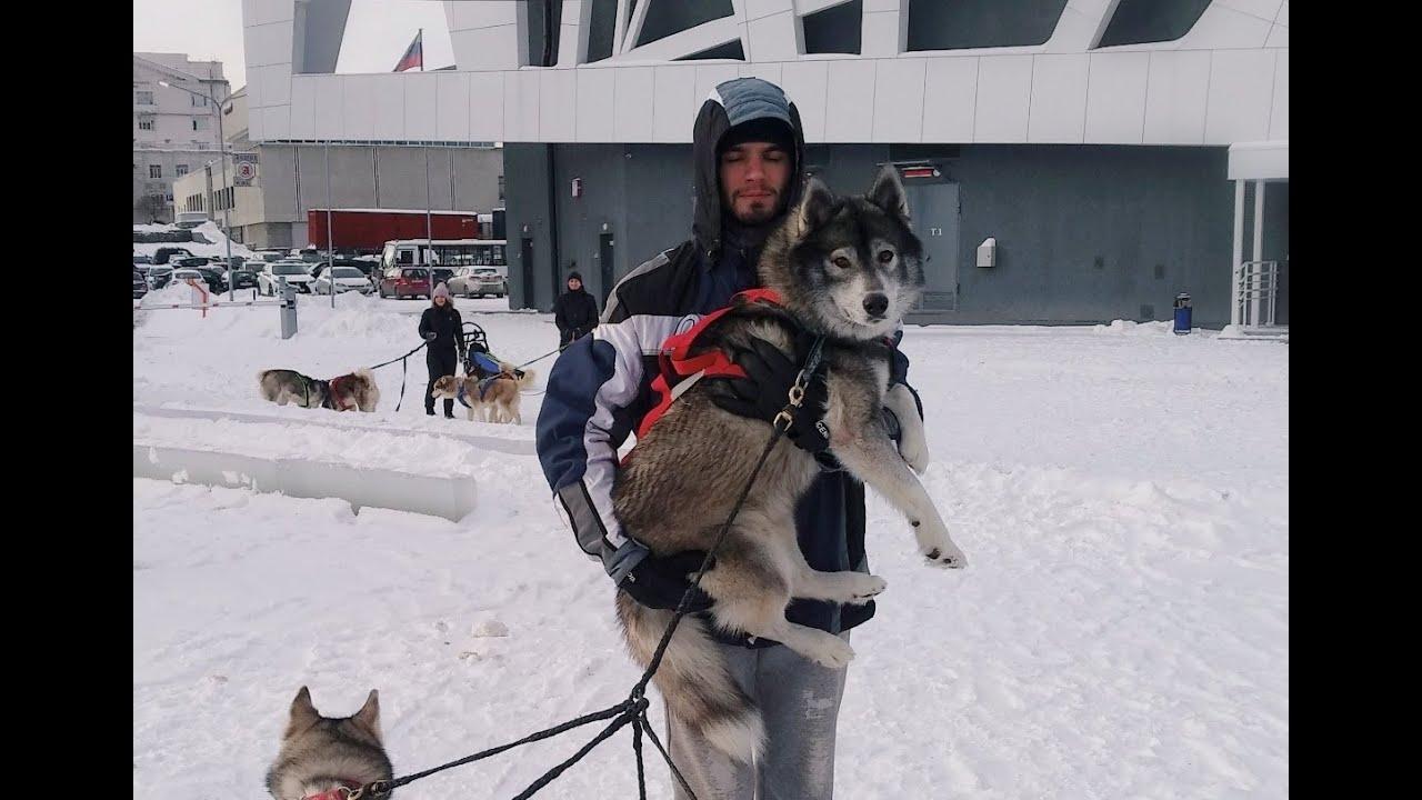 Клуб Хей-Хей. Катание на упряжке собак. Екатеринбург