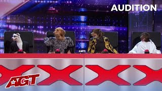 Canine Stars: HILARIOUS DOGS Replace The AGT Judges on America's Got Talent!