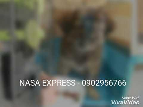 Gữi chó đi mỹ Nasa express – 0902956766