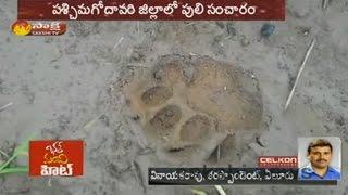 Tiger Hulchul in Dwaraka Tirumala || West Godavari District