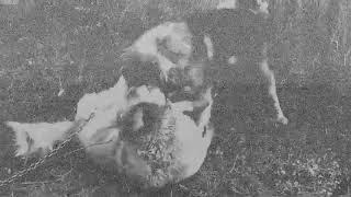 M R T - Anjing Kecil (Audio)