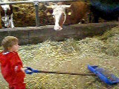 Sofi a farmkörüli