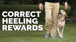 Michael Ellis On The Importance Of Rewarding  Your Dog Correctly When Heeling