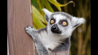 Animals of Madagascar - Documentary