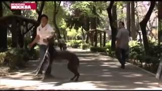 Столицы мира: Страхи владельцев домашних животных в Мехико.