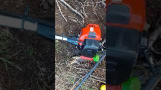 Benzinli sırt tırpanının testere başlığıyla ağaç kesimi Karaman Çiftliği