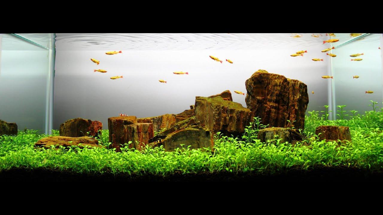 Freshwater Planted Aquarium Cloud Mountain ĺ�之深山 Youtube